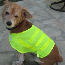 MPET14-SML Hi-Vis Pet Safety Vest from Sunset Survival and First Aid, Pet Safety Kits, Emergency Supplies, Disaster Preparedness
